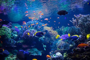 Keuken foto achterwand Koraalriffen Aquarium reef