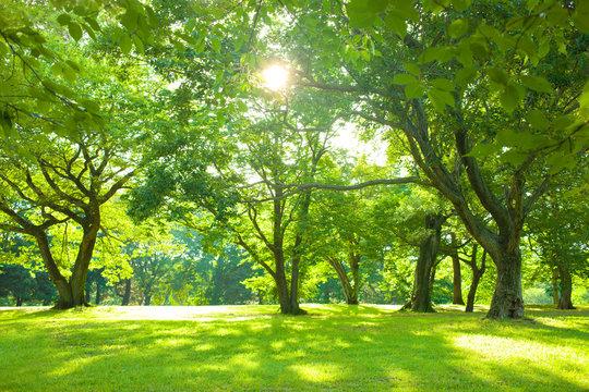 morning forest sunshine