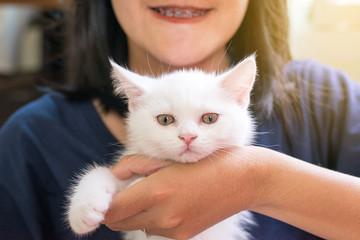 Happy woman holding cat Scottish white fluffy cute little animal