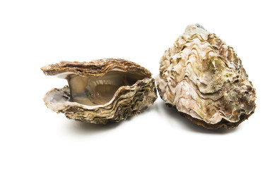 oyster isolated