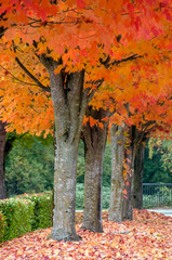 Autumn Color in a Row