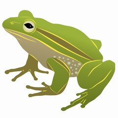 illustration of a frog , vector drawing