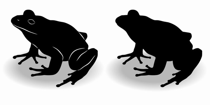 silhouette of a frog , vector drawing