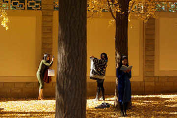 Women take pictures in an alley of autumn-coloured gingko trees in Beijing