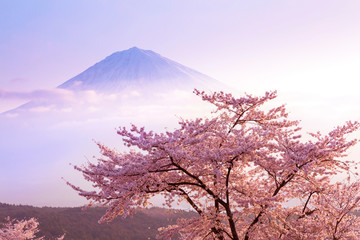 Fotobehang Kersenbloesem 桜と富士山と青空