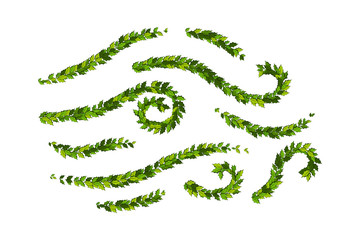 Christmas decorations with holly leaves, Ornamental design elements collection.