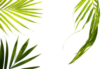 collection tropical green palm leaf frame picture on white background