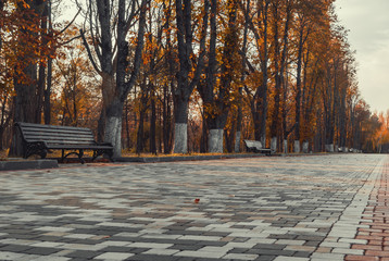 Printed roller blinds Beige Benches among trees in autumn park at sunset