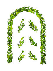 Christmas decorations with holly leaves and white berries. Vertical arch with design elements