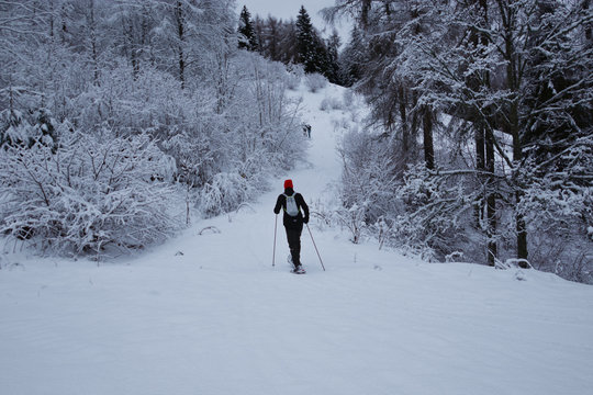 the alpinism skier, enters the forest