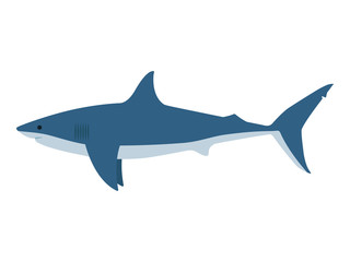 Vector illustration dangerous great white shark