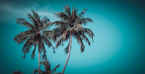 Coconut tree and blue sky. (vintage)