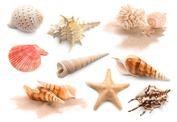 Different seashells with starfishes and coral on white background Wall mural
