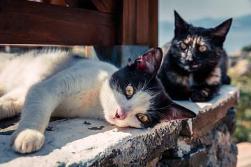 Street catі basking in the sun at the beach restaurant in Greece.