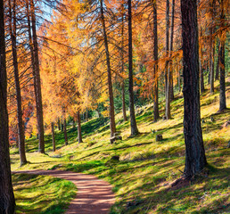 Beautiful autumn forest in the Dolomite Alps. Sunny morning view of mountain woodland, Cortina d'Ampezzo lacattion, Italy, Europe. Beauty of nature concept background.