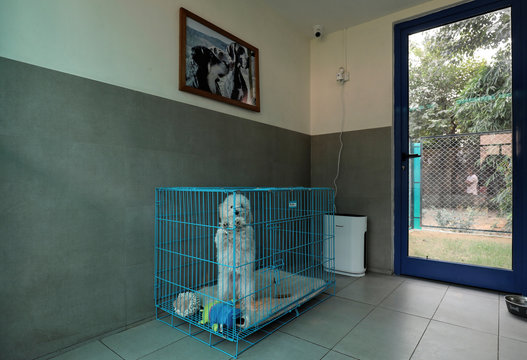 """""""Moti"""", a toy poodle breed, is seen in one of the rooms at TopDog, a Luxury Pet Resort, in Gurugram"""