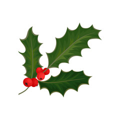 Holly with red berries and green leaves. Traditional Christmas symbol. Flat vector element for holiday postcard