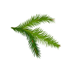 Green branch of fir or pine tree. Natural element. Christmas plant. Botany and flora theme. Flat vector icon