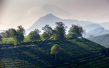 Tea hills in Long Coc highland, Phu Tho province in Vietnam