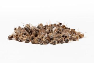 Apiculture - disparition des abeilles
