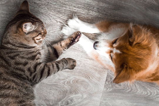 Cat and dog play together. Friendship between animals. Close-up