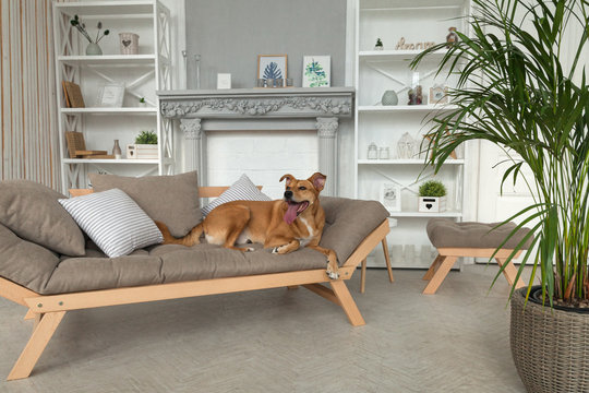Happy ginger mixed breed dog in luxurious bright colors classic eclectic style living room with gray sofa and pillows, decorative bookshelves and green plants. Pets friendly  hotel or home room.