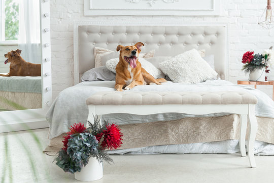 Happy ginger mixed breed dog in luxurious bright colors classic eclectic style bedroom with king-size bed and bedside table, green plants. Pets friendly  hotel or home room.