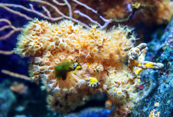 A coral reef is seen at the Aquarium Pula