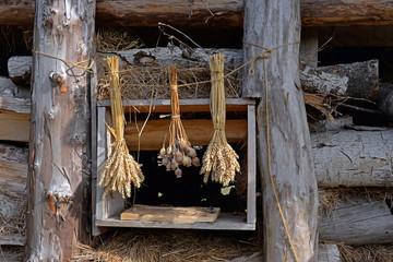 Feldfrüchte im Wikingermuseum Wollin