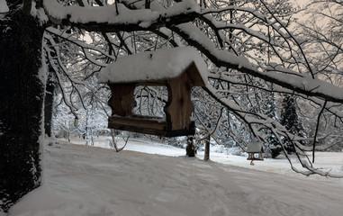 Night winter park in Lviv, Ukraine