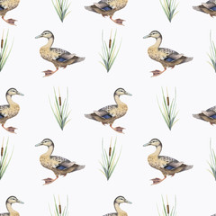 Seamless pattern with watercolor wild ducks and plants