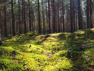 Поляна, лес, грибы, лето, природа