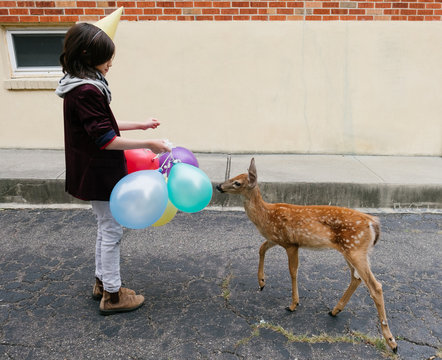 A young boy meets a baby deer