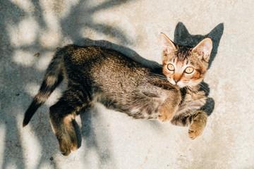cat pet on ground
