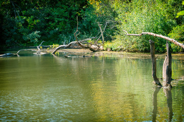 A beautiful river flows through a dense, overgrown forest. Landscape summer forest with a river. Outdoor recreation.