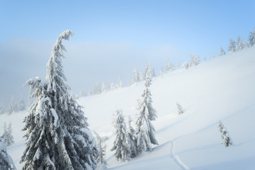 Fototapete - Background with winter nature