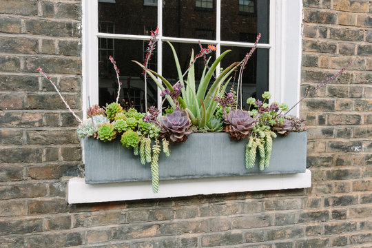 Windowsill box succulent garden in London