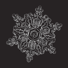 Snowflake isolated on black background. Vector illustration based on macro photo of real snow crystal: large stellar dendrite with hexagonal symmetry, complex ornate shape and glossy relief surface.