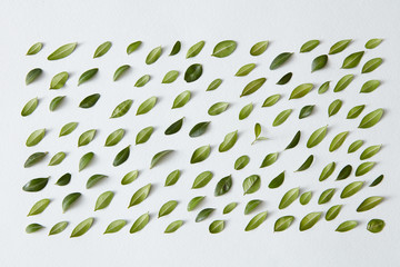 Green little leaves represented over white background
