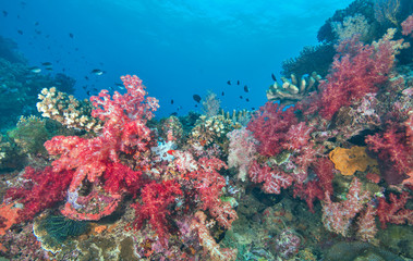 Healthy soft coral with fish life
