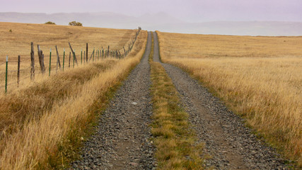 Dirt road on Hastings Mesa leads to wilderness and grasslands, Ridgway Colorado Wall mural