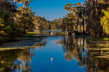 Cajun Swamp & Lake Martin, near Breaux Bridge and Lafayette Louisiana Wall mural
