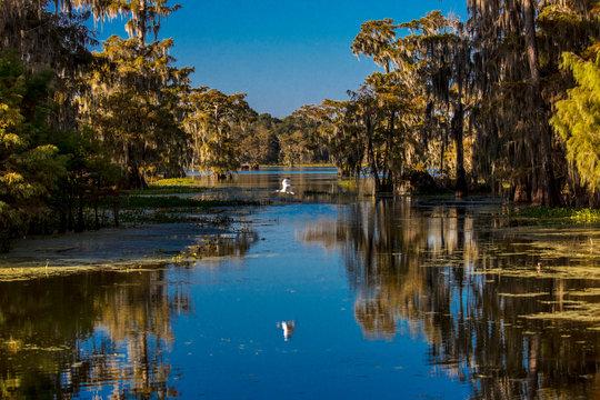 Cajun Swamp & Lake Martin, near Breaux Bridge and Lafayette Louisiana