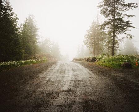Wet dirt road in fog