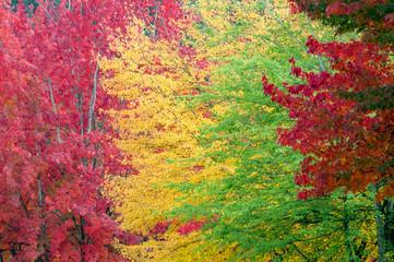 Autumn Color Rainbow