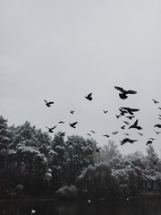 Birds flying above tranquil lake
