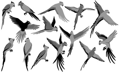 Vector parrot silhouettes of jungle