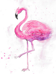 watercolor hand drown flamingo