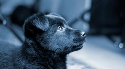 monochrome shot of a black puppy