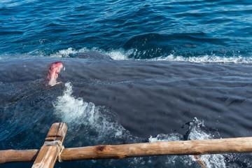 ラマレラ村 捕鯨